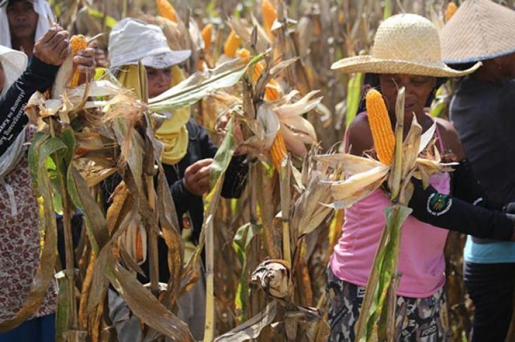 De Oro Harvest Field INC